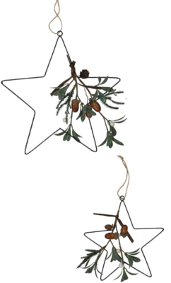 Eucalyptus Star Duo